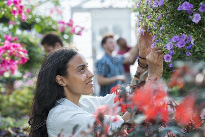 Ein kommerziell Gewächshaus in einem Pflanzengarten, der organische Blumen anbaut. Eine Gruppe von Menschen, die arbeiten.