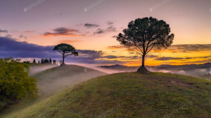 Dreamy landscape Tuscany