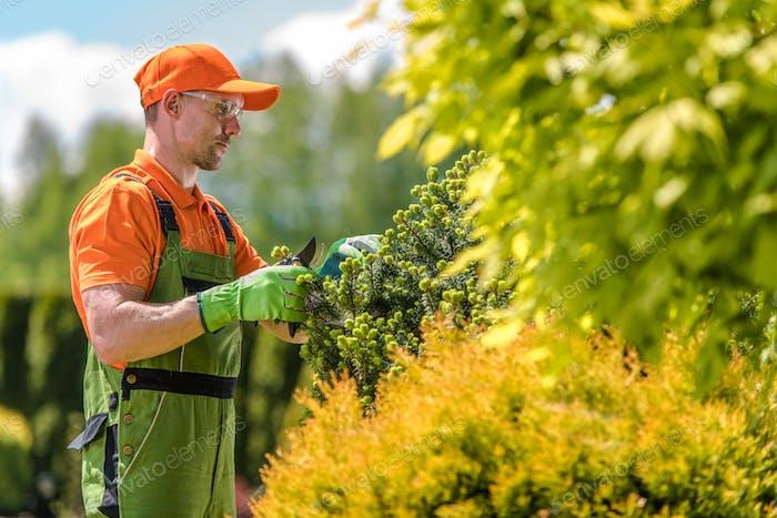 Garden Care and Maintenance