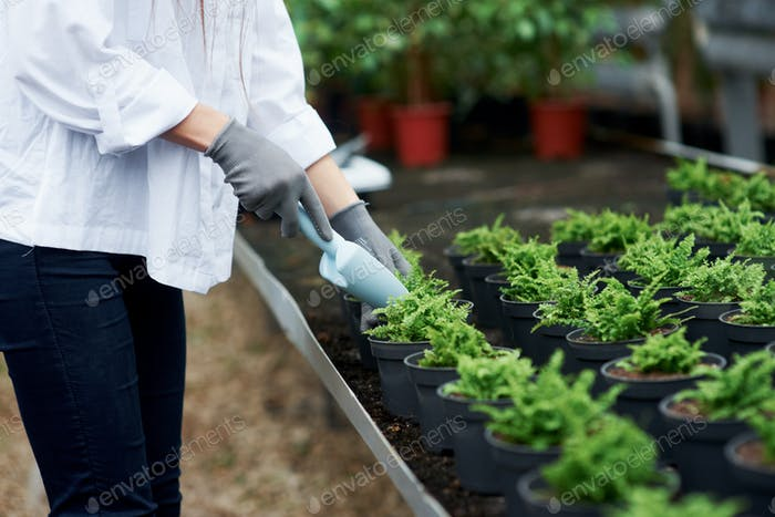Girl is working. Close up view of hands in gloves working with the plants in the pots