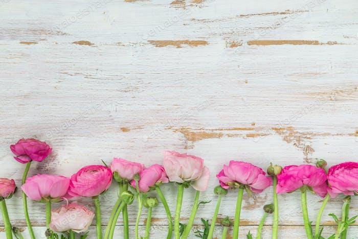 Ramo de Ranunculus Rosa, Flores de Ranúnculo