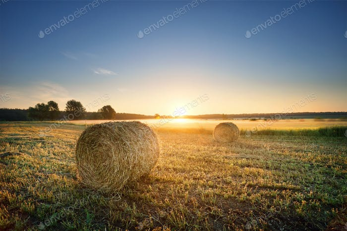 Round pressed bundles of hay on the field