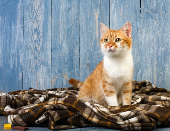 Ginger cat sitting on plaid blanket