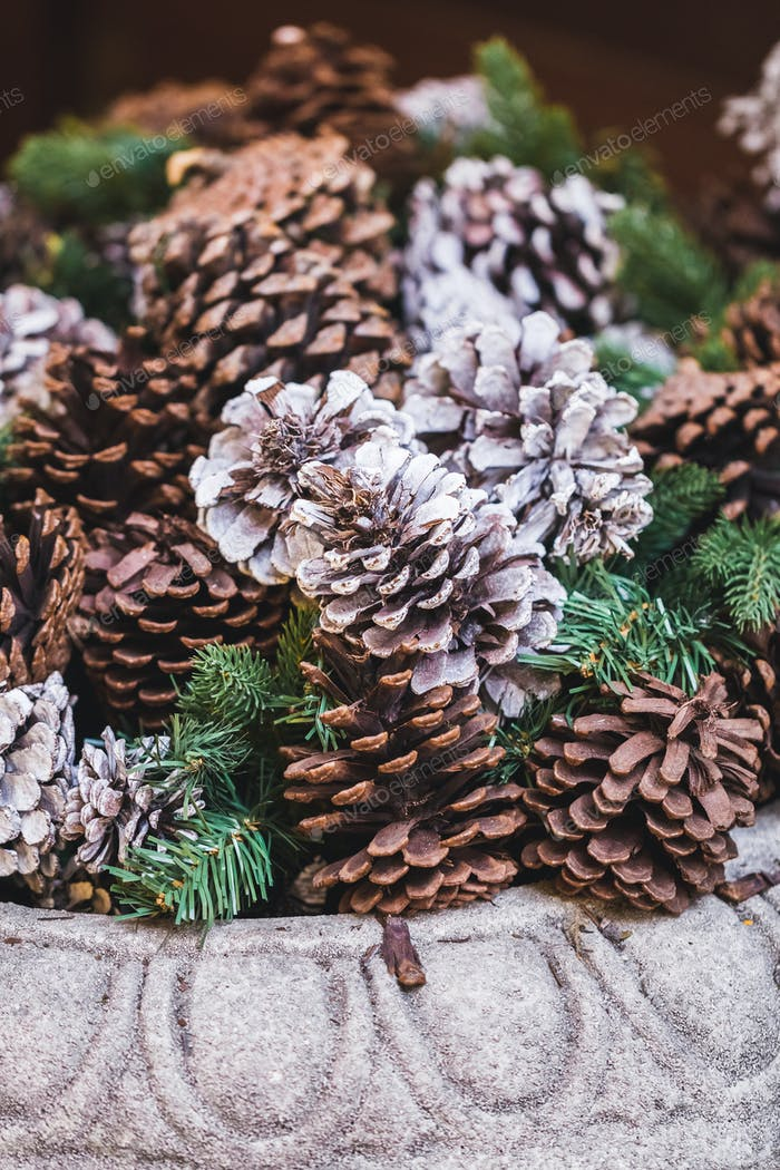 Pine cones like a Christmas decoration