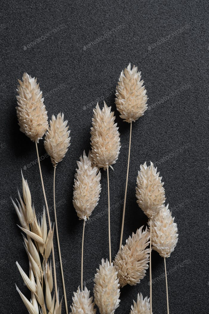Dried flower for handcraft
