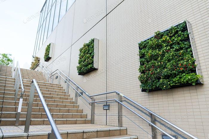 Grüne Pflanze an der Wand