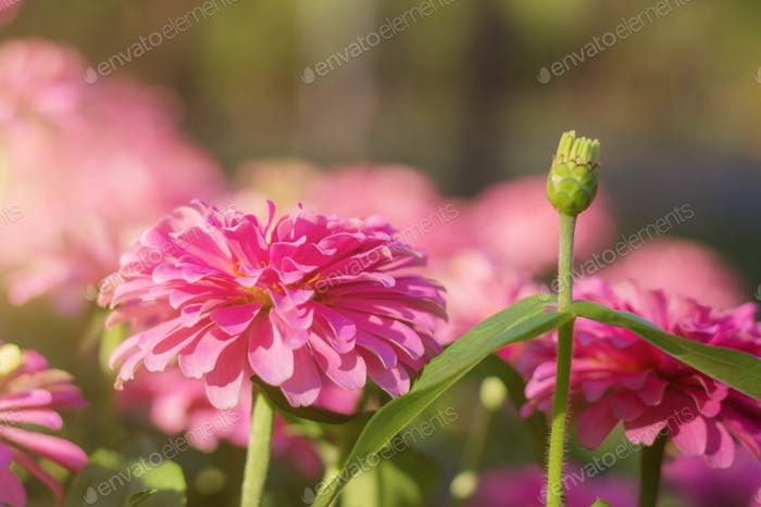 Pink flower with beautiful