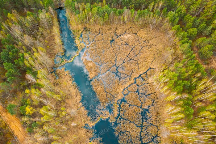 Spring Season. Aerial View. Young Birches Grow Among Small Marsh Bog Swamp River. Deciduous Trees