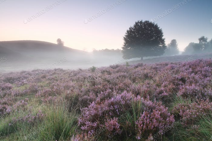 beautiful pink flowers in fog