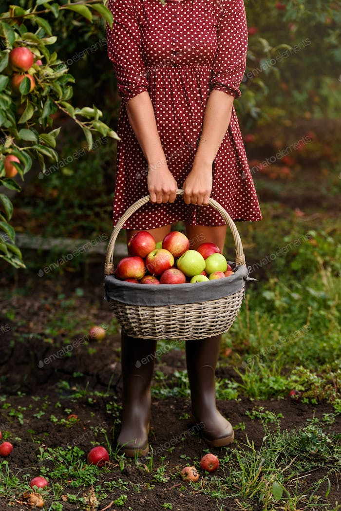 A young woman holding basket with apples