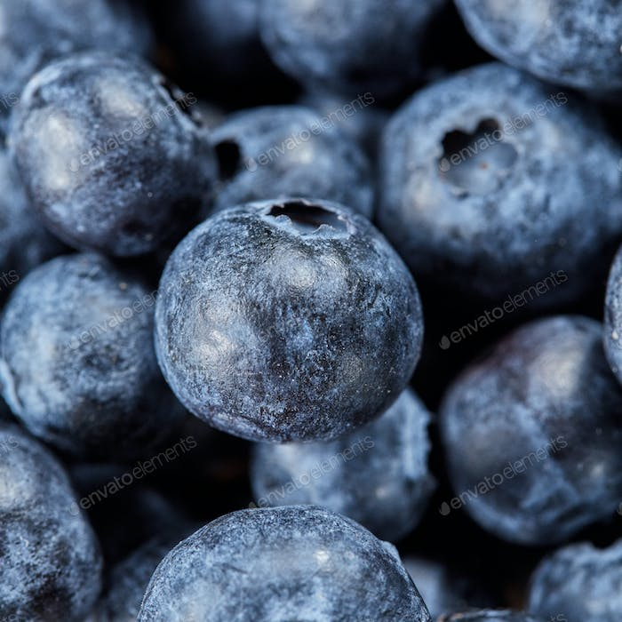 Blueberries background from natural organic freshly picked fruits. Macro of ripe fresh blueberries
