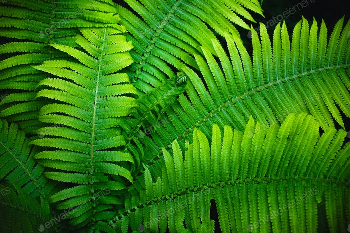 Fern leaves full screen