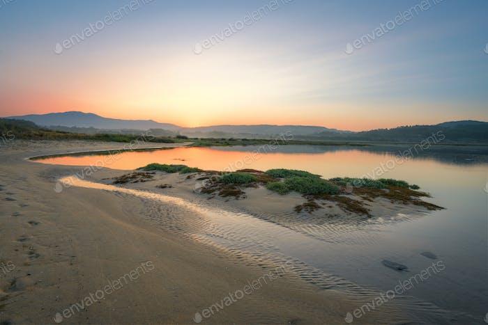 Native dune vegetation on a sandbar by the sea