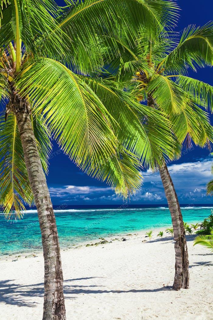 Tropical beach with rocks and palms on Cook Islands, Rarotonga