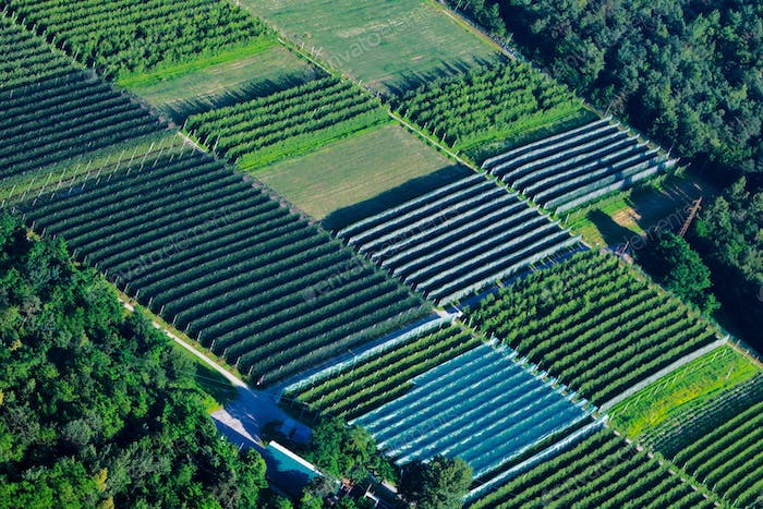 Large cultivation greenhouse seen