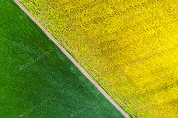 Aerial view of green fields in spring. Beautiful spring rural landscape
