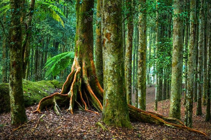 Botanic garden of Bali