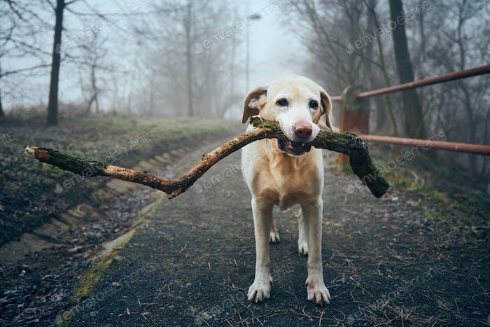 Dog with stick on sidewalk in public park in fog