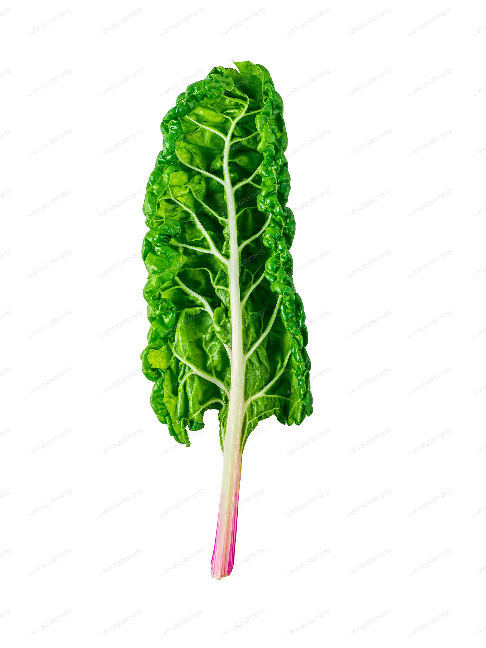 Swiss Rainbow Chard Isolated On White Photo By Fasci On Envato Elements