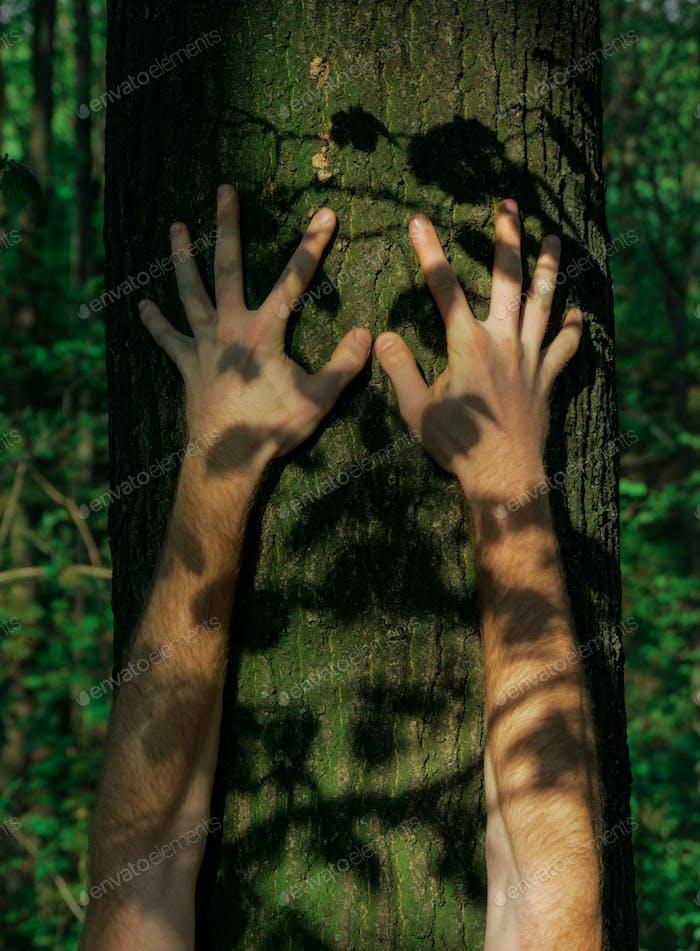 forest hug