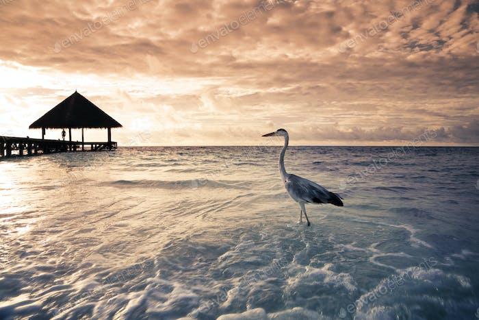 Tropical Beach In Den Malediven