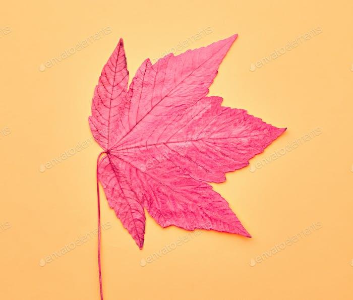 Autumn Art. Fall Fashion. Minimal. Maple Leaf