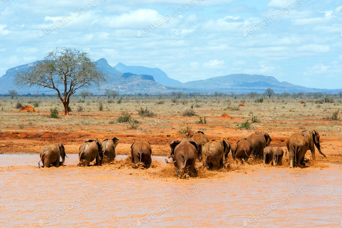 Elephant in water. National park of Kenya