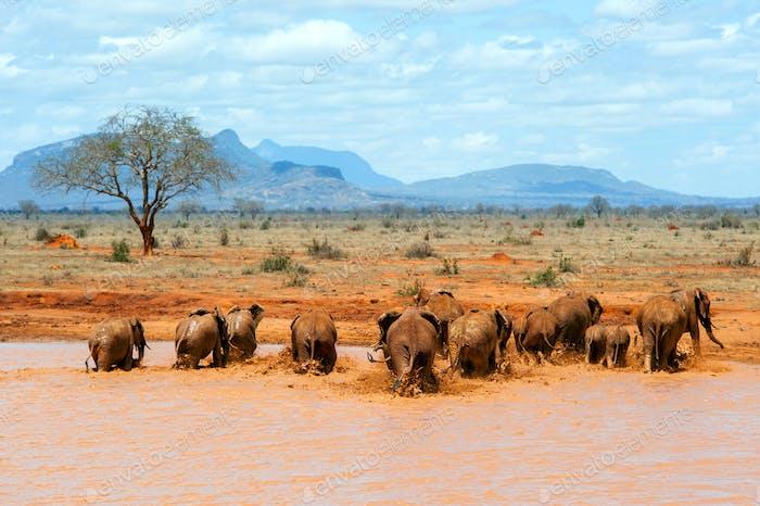 Elefante en el agua. Parque Nacional de Kenia