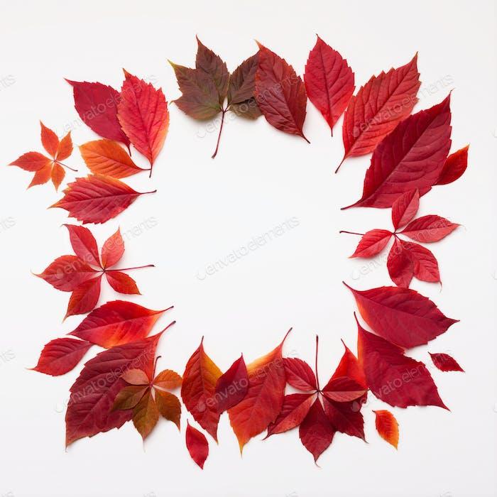 Kreativer Rahmen mit weißem Kopierraum aus rot gefallenen Herbstblättern