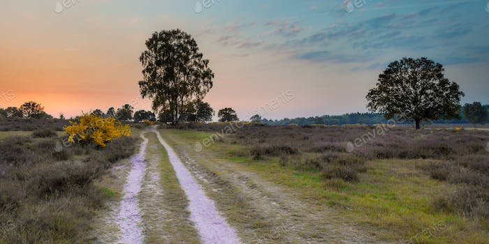 Sunset over Heathland on Utrechtse heuvelrug