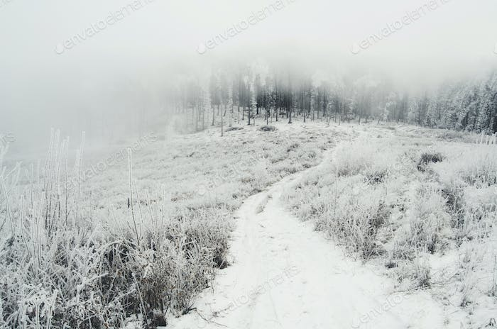 road in nature on misty winter day with snow on the ground and f