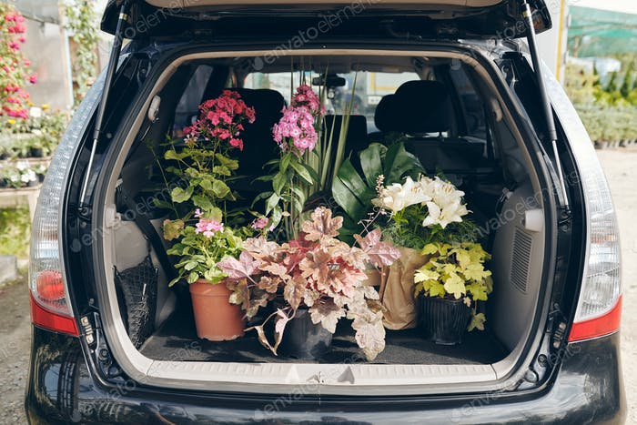 Open trunk with potted plants