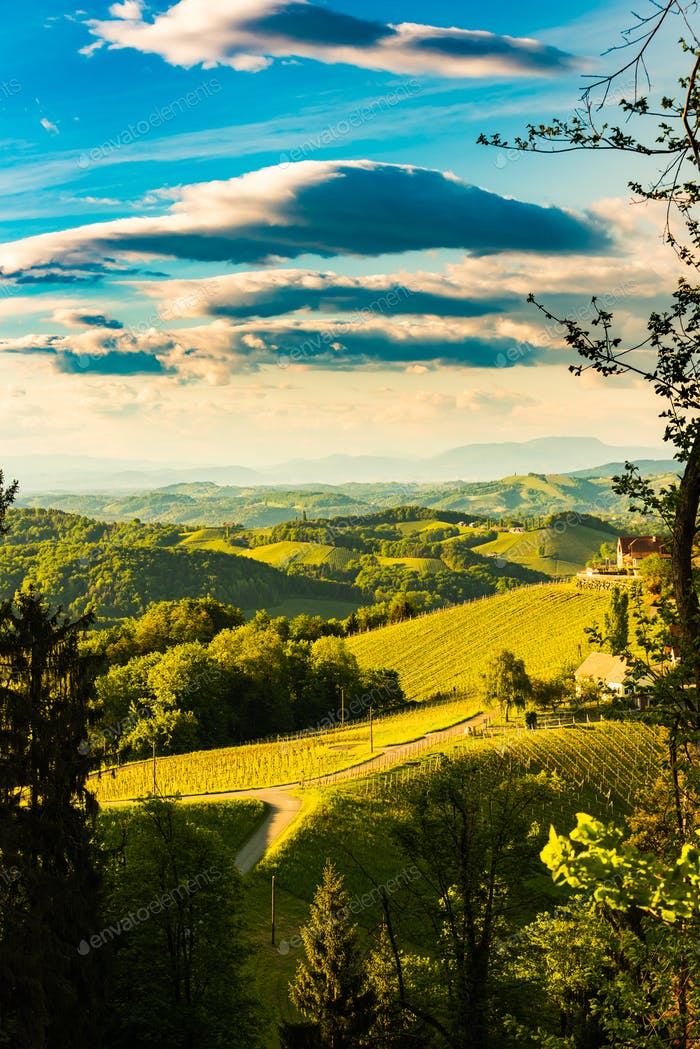 South styria vineyards landscape, near Gamlitz, Austria, Europe. Grape hills view from wine road in