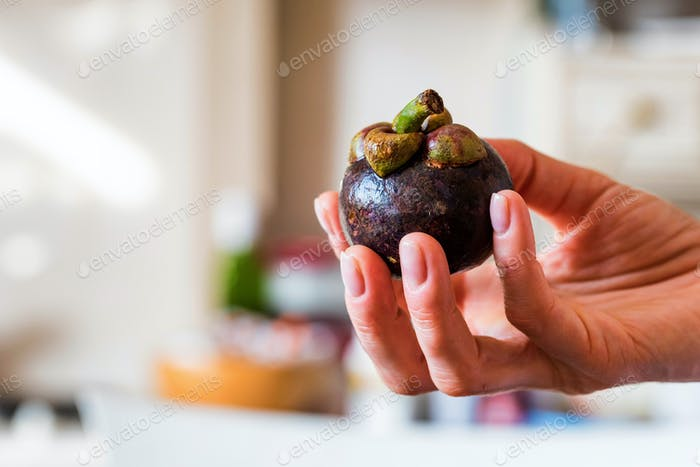 Close up fresh mangosteen fruit in woman's hand