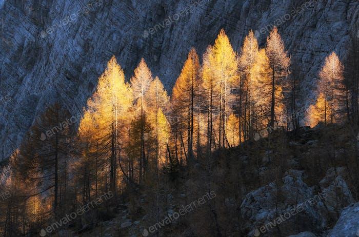 Autumn in the Julian Alps