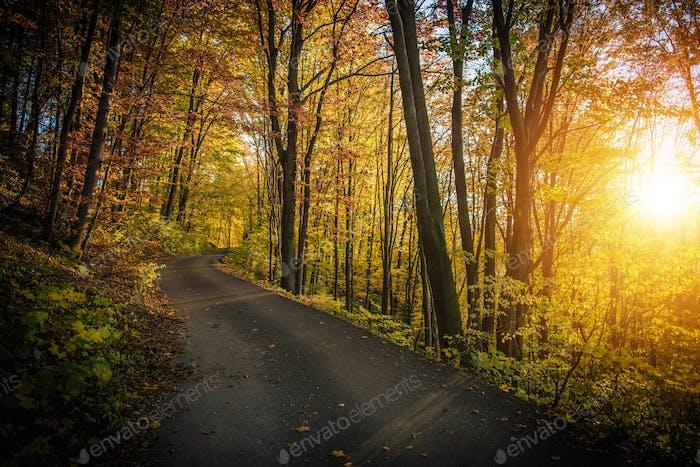 Route forestière du feuillage d'automne