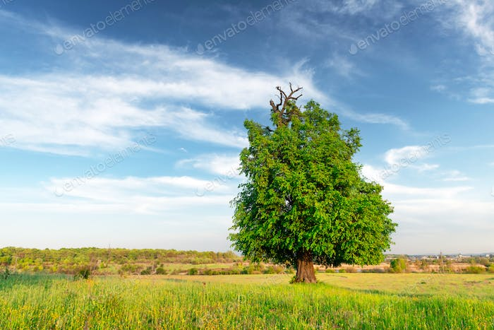 Summer meadow with beautiful trees and lush green grass