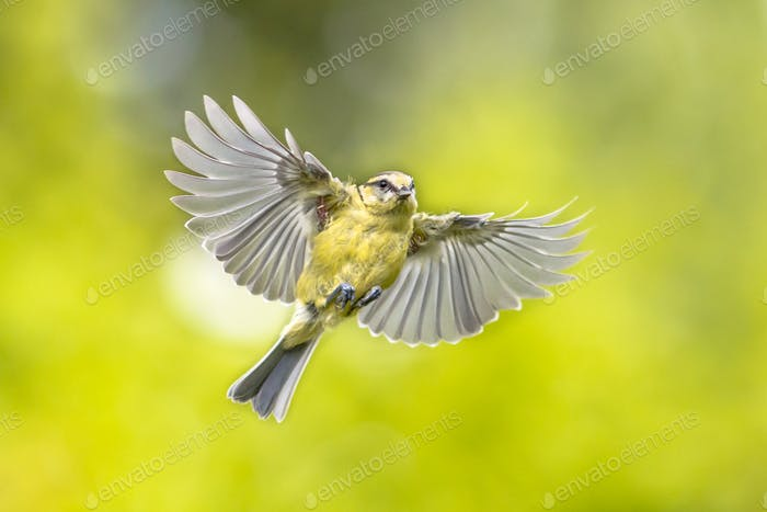 Bird in flight on vivid green garden background