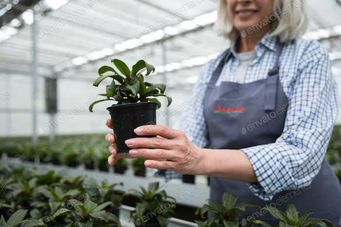 Cropped picture of mature woman standing in greenhouse