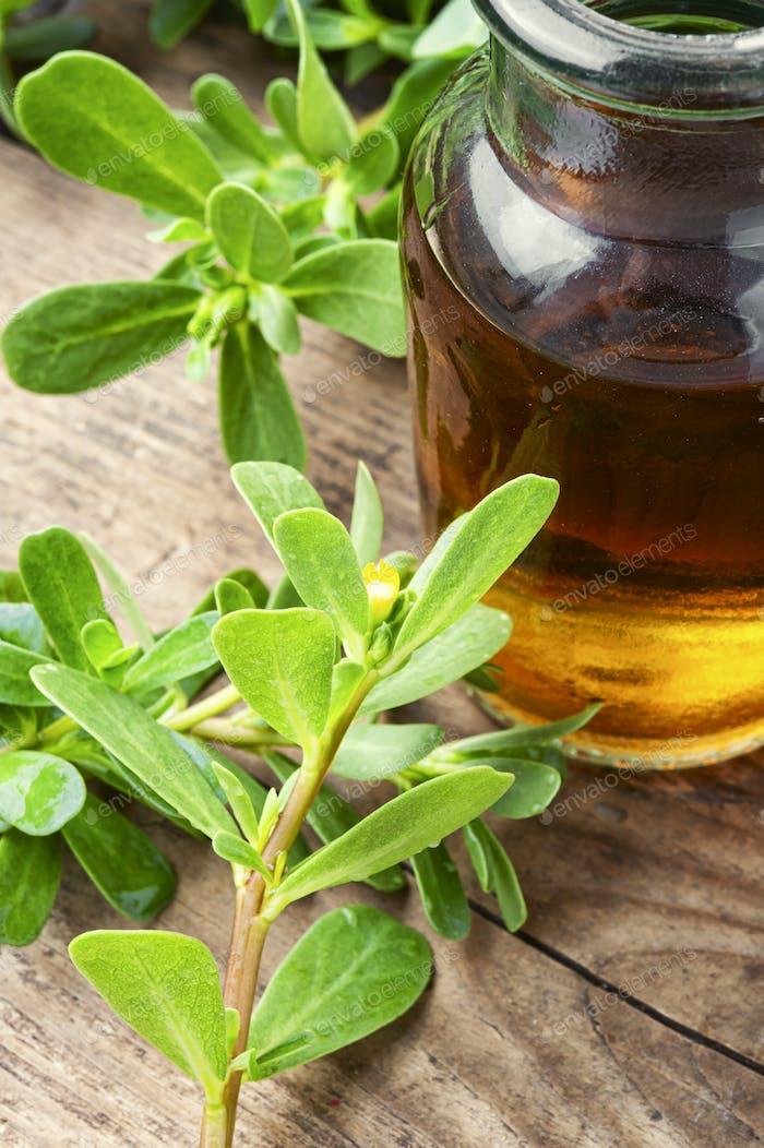 Purslane medicinal plant