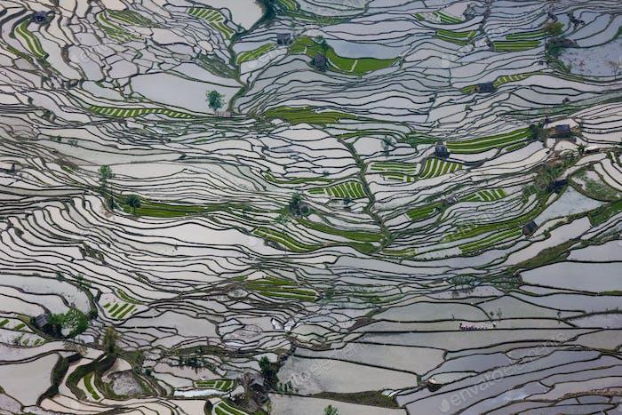 Reiffelder, Yuanyang, China