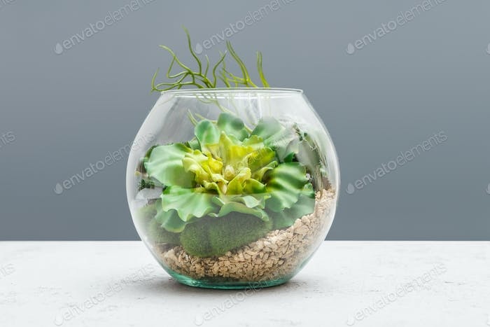 Succulent plants in florarium