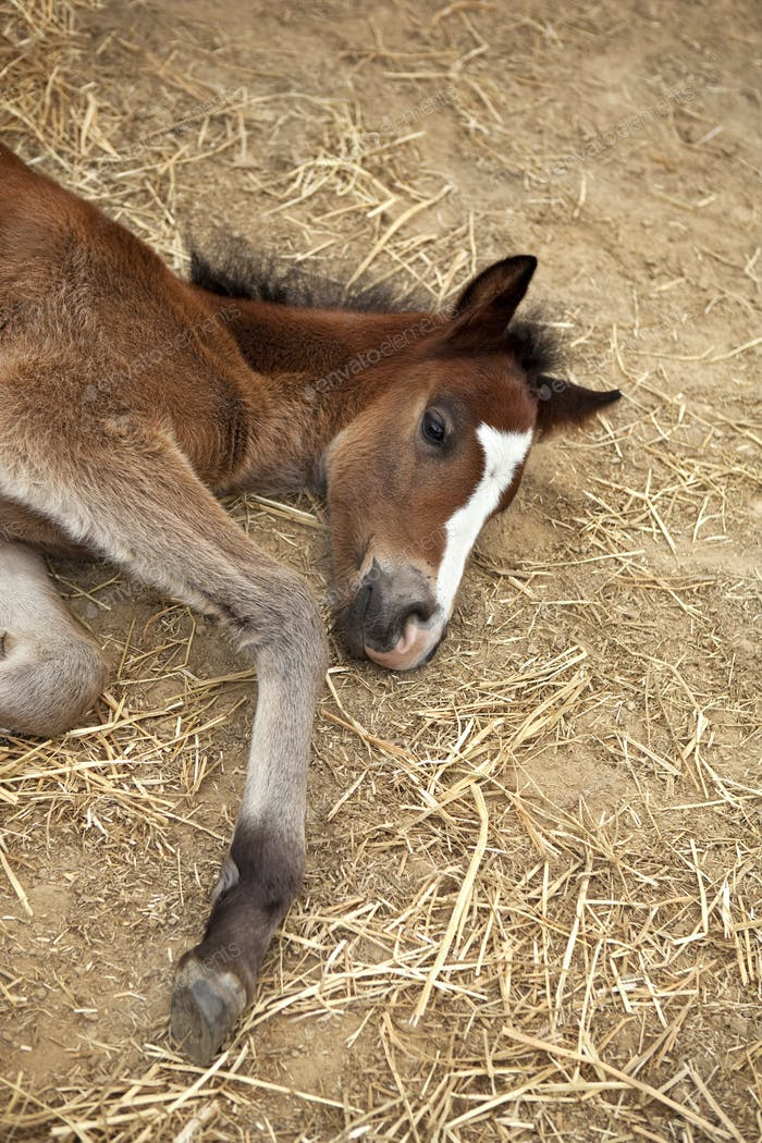 Foal in a farm stable
