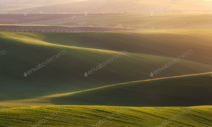 Green fields in the evening in South Moravia