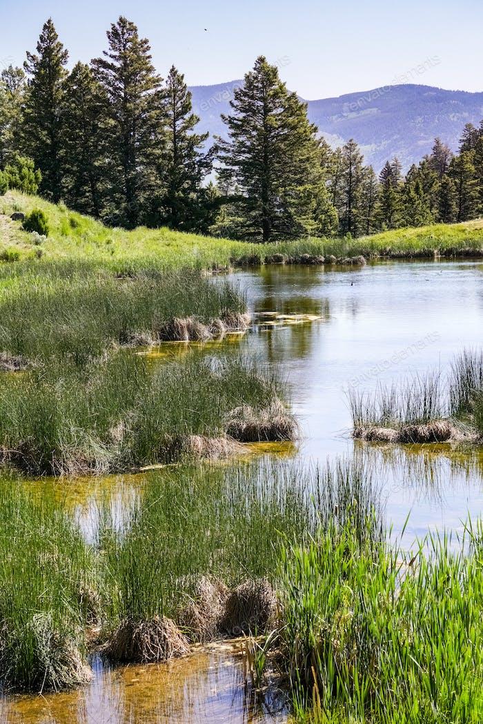 Beaver Ponds, Yellowstone National Park