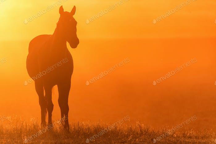 Wild horse grazes in the meadow at sunset