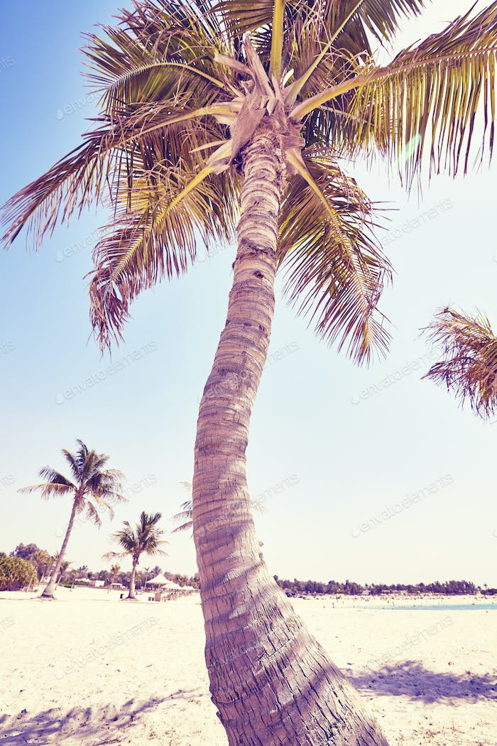 Vintage toned picture of coconut palms on a beach.