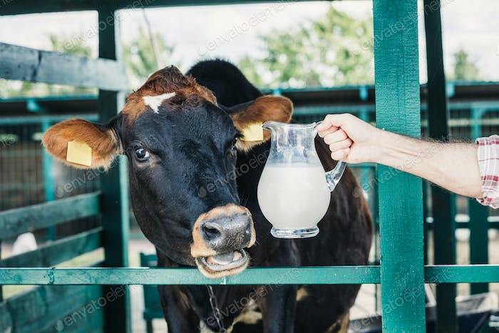 cropped shot of farmer holding glass jug with fresh milk while standing near cow