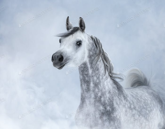 Arabian horse in light smoke.