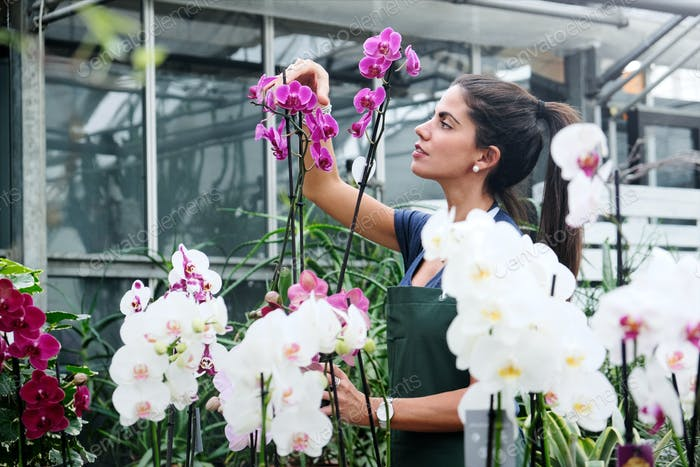 Las personas que trabajan en la floristería